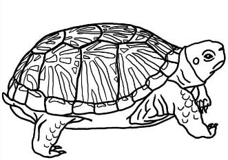 TurtlePartiesColoringPages